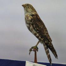 Image of Birds - 72.0308.505