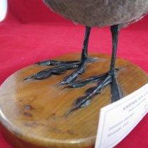 Image of Birds - 72.0372.524