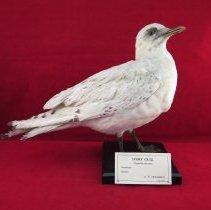Image of Birds - 72.0421.806