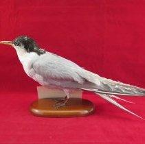 Image of Birds - 72.0438.1130