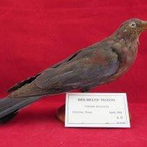Image of Birds - 72.0463.345