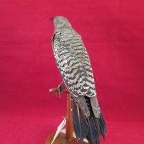 Image of Birds - 72.0556.334