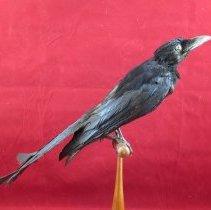 Image of Birds - 72.0101.449