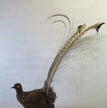 Image of Birds - 72.0102.720