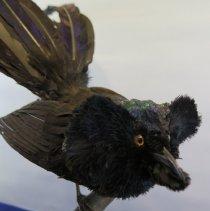 Image of Birds - 72.0104.118