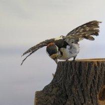 Image of Birds - 72.0105.402