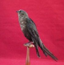 Image of Birds - 72.0585.391