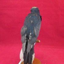 Image of Birds - 72.0621.893