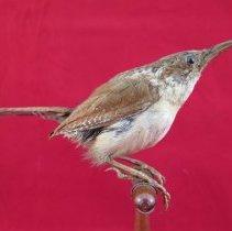 Image of Birds - 72.0665.1177