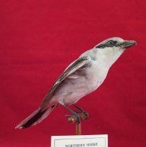 Image of Birds - 72.0690.628