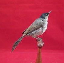 Image of Birds - 72.0701.968