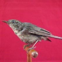 Image of Birds - 72.0717.1245