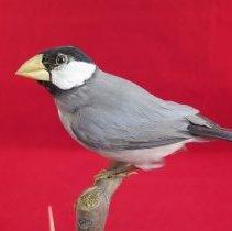 Image of Birds - 72.0724.804