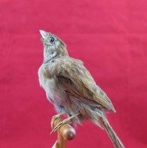 Image of Birds - 72.0749.31