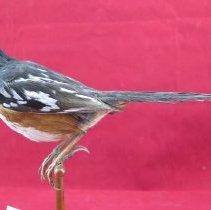 Image of Birds - 72.0843.918