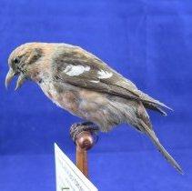 Image of Birds - 72.0850.678