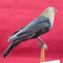 Image of Birds - 72.0868.741