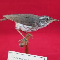 Image of Birds - 72.0909.1057