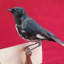 Image of Birds - 72.0925.406