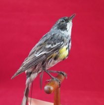 Image of Birds - 72.0931.413