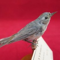 Image of Birds - 72.0935.1248