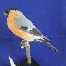 Image of Birds - 72.1074.1000