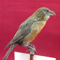 Image of Birds - 72.1084.673