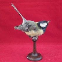 Image of Birds - 81.1176.823