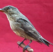 Image of Birds - 85.0119.352
