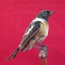 Image of Birds - 90.0012.1045