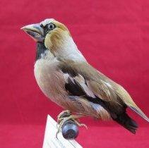 Image of Birds - 90.0013.323
