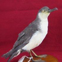 Image of Birds - 72.0164.996
