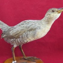 Image of Birds - 72.0368.1012