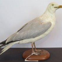 Image of Birds - 72.0420.640