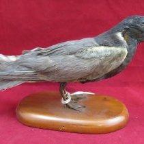 Image of Birds - 72.0434.290