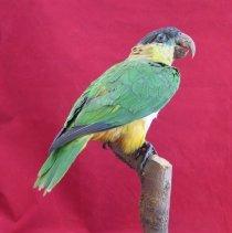 Image of Birds - 72.0473.913