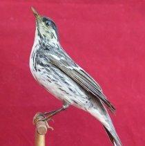 Image of Birds - 72.0914.440