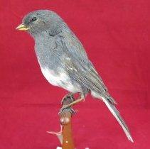 Image of Birds - 72.1059.614
