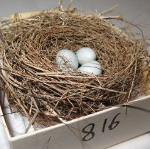 Image of Eggs - 79.816