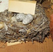 Image of Eggs - 79.851.307