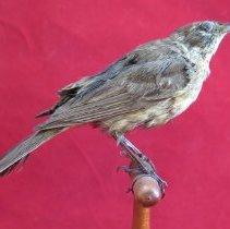 Image of Birds - 85.0025.430