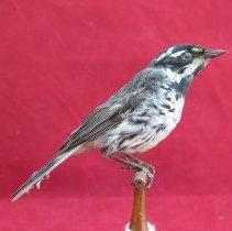 Image of Birds - 85.0058.428
