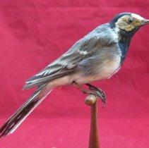 Image of Birds - 85.0084.747