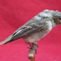 Image of Birds - 85.0132.354