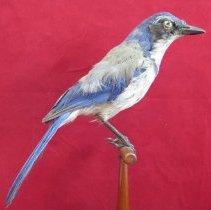 Image of Birds - 85.0194.91