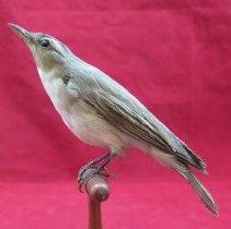 Image of Birds - 85.0198.1264
