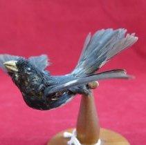 Image of Birds - 85.0259.1120