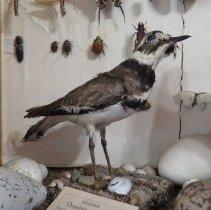 Image of Birds - 93.0539.1308