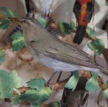 Image of Birds - 15.0065.65
