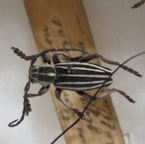 Image of Insects - 92.0407.854